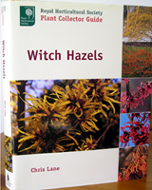 Witch Hazels - By Christopher Lane